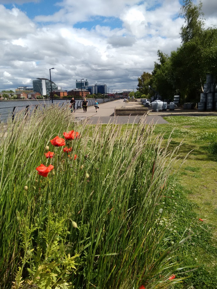 Promenade Park, looking towards Silent Cargo and Trafford Road Bridge