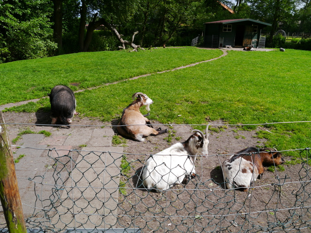 Small petting farm off one of the cycle routes in Wassenaar