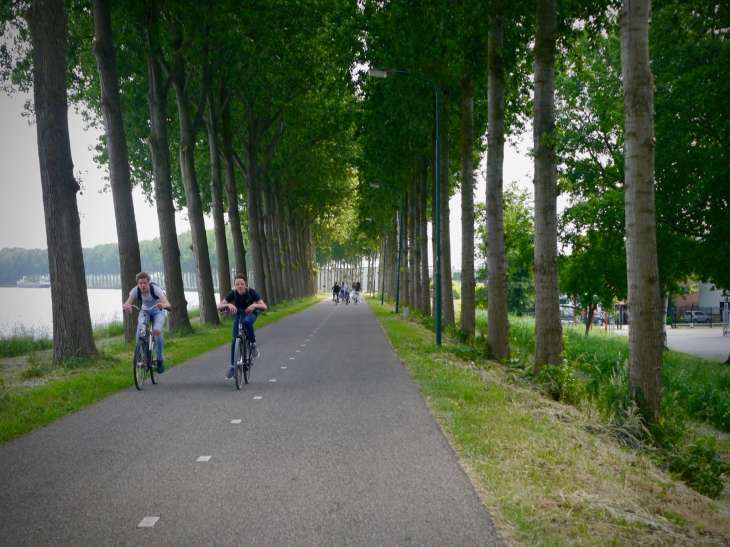 Sheltering in the trees on Kanaaldijk West